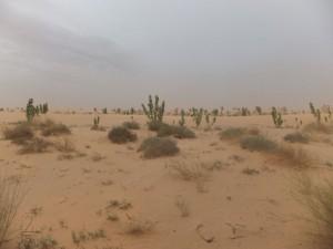 De ongerepte Sahara